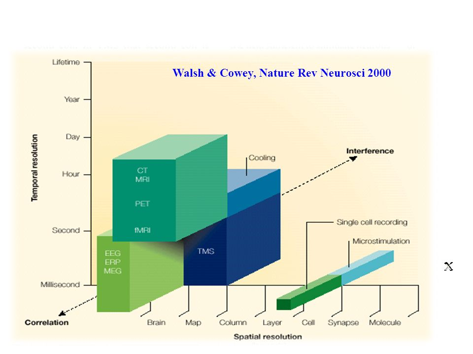 Walsh & Cowey, Nature Rev Neurosci 2000 x x