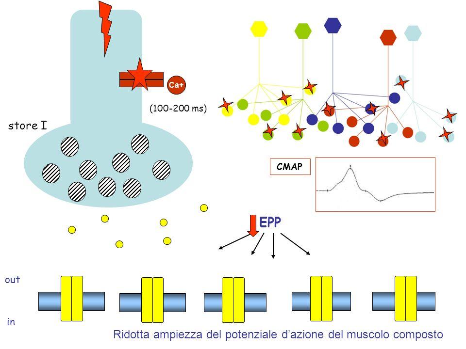 out in Ca+ store I (100-200 ms) EPP CMAP Ridotta ampiezza del potenziale dazione del muscolo composto