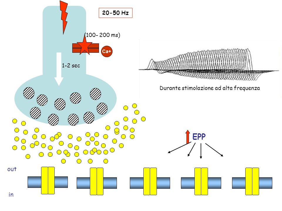 (100- 200 ms) 1-2 sec 20-50 Hz Ca+ EPP out in Durante stimolazione ad alta frequenza