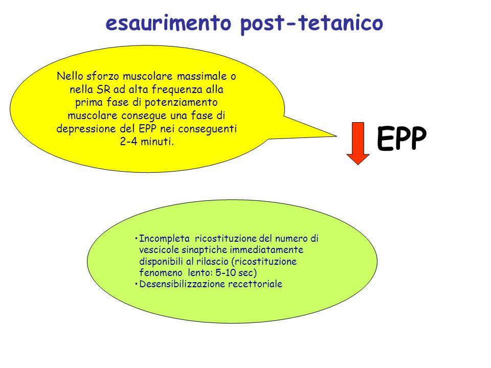 esaurimento post-tetanico EPP Incompleta ricostituzione del numero di vescicole sinaptiche immediatamente disponibili al rilascio (ricostituzione feno