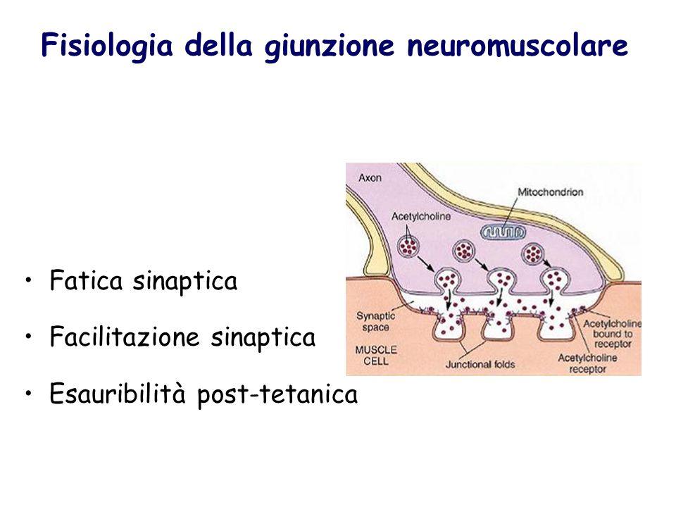 Fisiologia della giunzione neuromuscolare Fatica sinaptica Facilitazione sinaptica Esauribilità post-tetanica