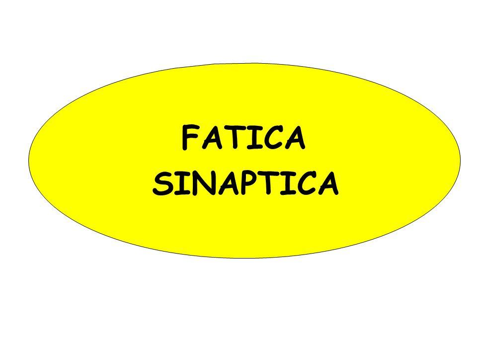 FATICA SINAPTICA