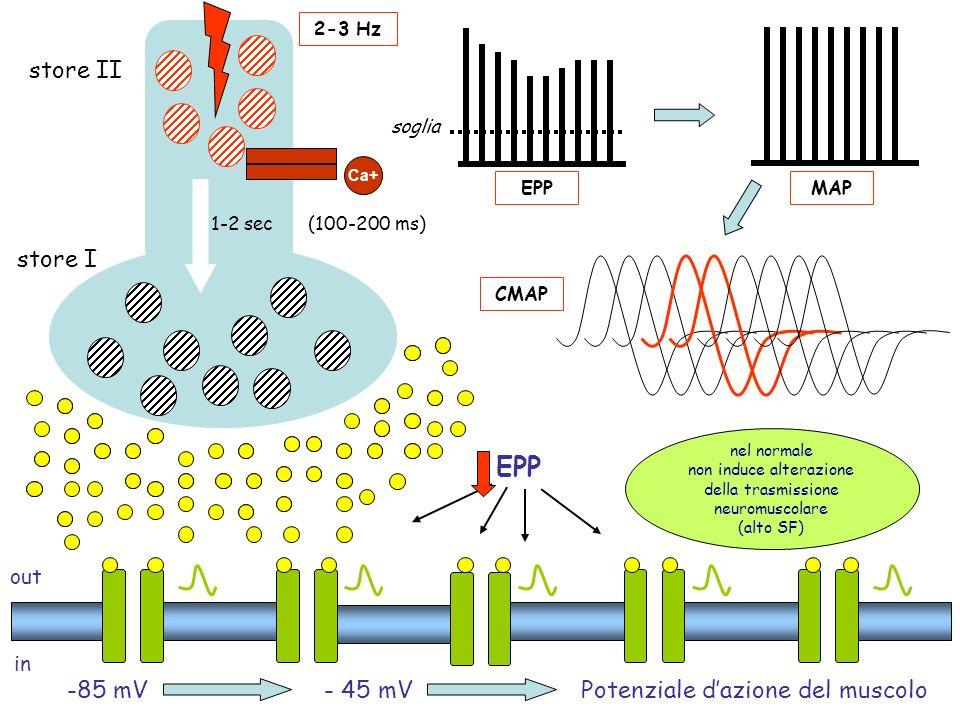out in -85 mV Ca+ - 45 mVPotenziale dazione del muscolo store I store II nel normale non induce alterazione della trasmissione neuromuscolare (alto SF