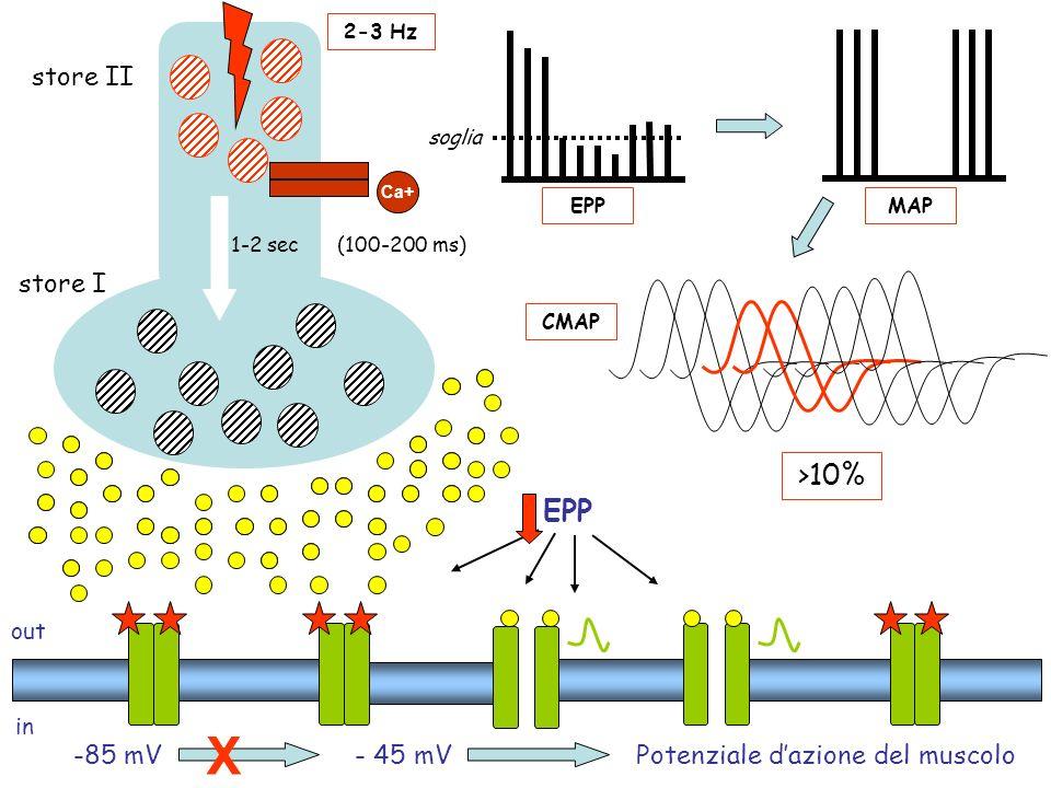 out in -85 mV- 45 mVPotenziale dazione del muscolo EPPMAP CMAP >10% soglia EPP X Ca+ store I store II (100-200 ms)1-2 sec 2-3 Hz