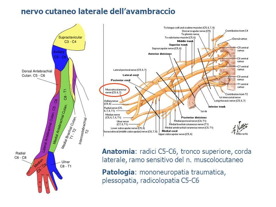 nervo cutaneo laterale dellavambraccio Anatomia: radici C5-C6, tronco superiore, corda laterale, ramo sensitivo del n. muscolocutaneo Patologia: monon