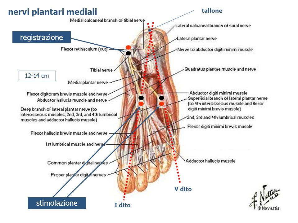 registrazione 12-14 cm tallone I dito V dito stimolazione