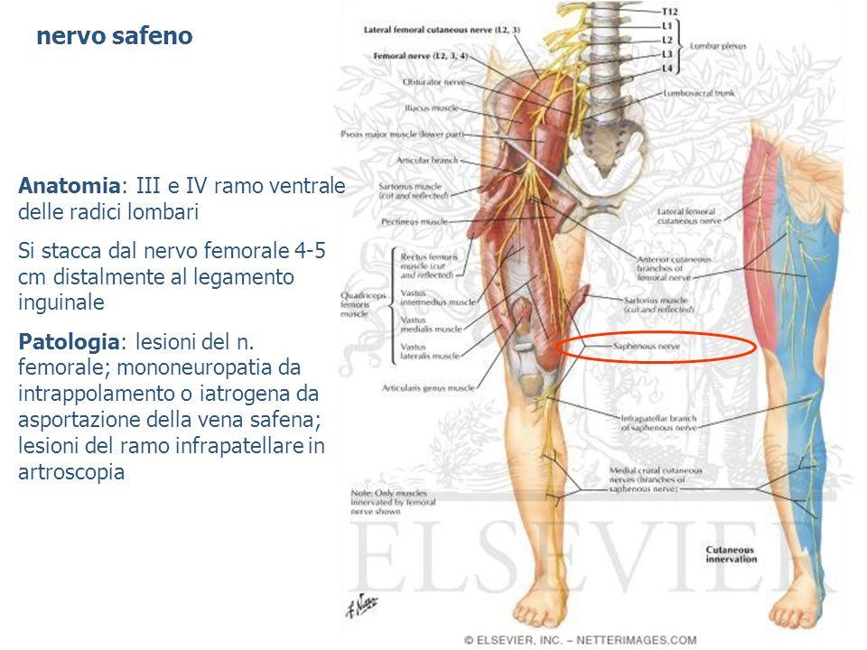 nervo toracico lungo Anatomia: radici C5, C6 e C7 prima della formazione del plesso brachiale ed innerva il muscolo gran dentato Patologia: mononeuropatia, s.