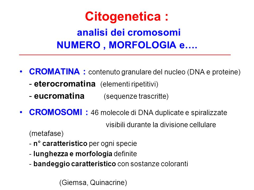 Citogenetica : analisi dei cromosomi NUMERO, MORFOLOGIA e…. CROMATINA : contenuto granulare del nucleo (DNA e proteine) - eterocromatina (elementi rip