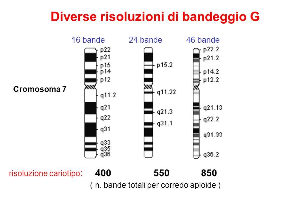 risoluzione cariotipo : 400 550 850 ( n. bande totali per corredo aploide ) Cromosoma 7 Diverse risoluzioni di bandeggio G 16 bande24 bande46 bande
