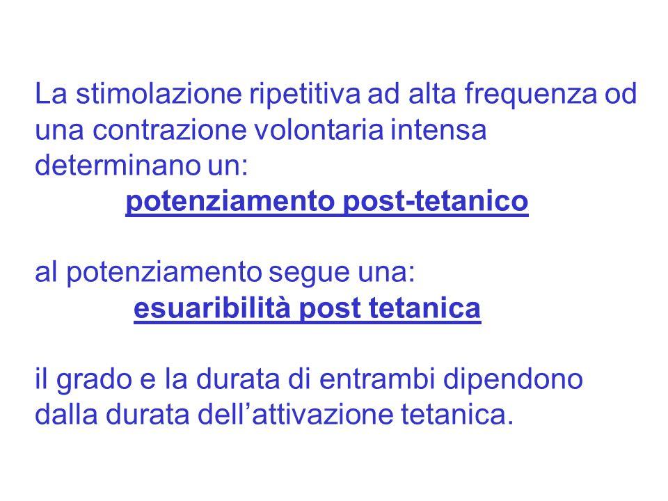 La stimolazione ripetitiva ad alta frequenza od una contrazione volontaria intensa determinano un: potenziamento post-tetanico al potenziamento segue una: esuaribilità post tetanica il grado e la durata di entrambi dipendono dalla durata dellattivazione tetanica.