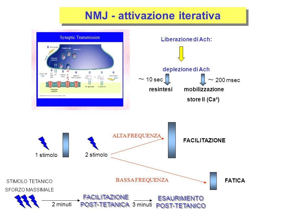 NMJ - attivazione iterativa Liberazione di Ach: deplezione di Ach resintesi mobilizzazione store II (Ca²) ~ 200 msec ~ 10 sec 1 stimolo 2 stimolo FACILITAZIONE FATICA STIMOLO TETANICO SFORZO MASSIMALE ALTA FREQUENZA BASSA FREQUENZA 2 minuti FACILITAZIONE POST-TETANICA FACILITAZIONE POST-TETANICA 3 minuti ESAURIMENTO POST-TETANICO ESAURIMENTO POST-TETANICO
