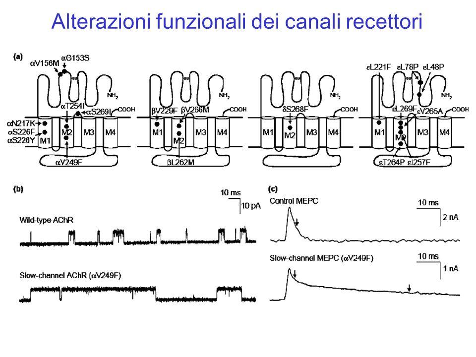 Alterazioni funzionali dei canali recettori
