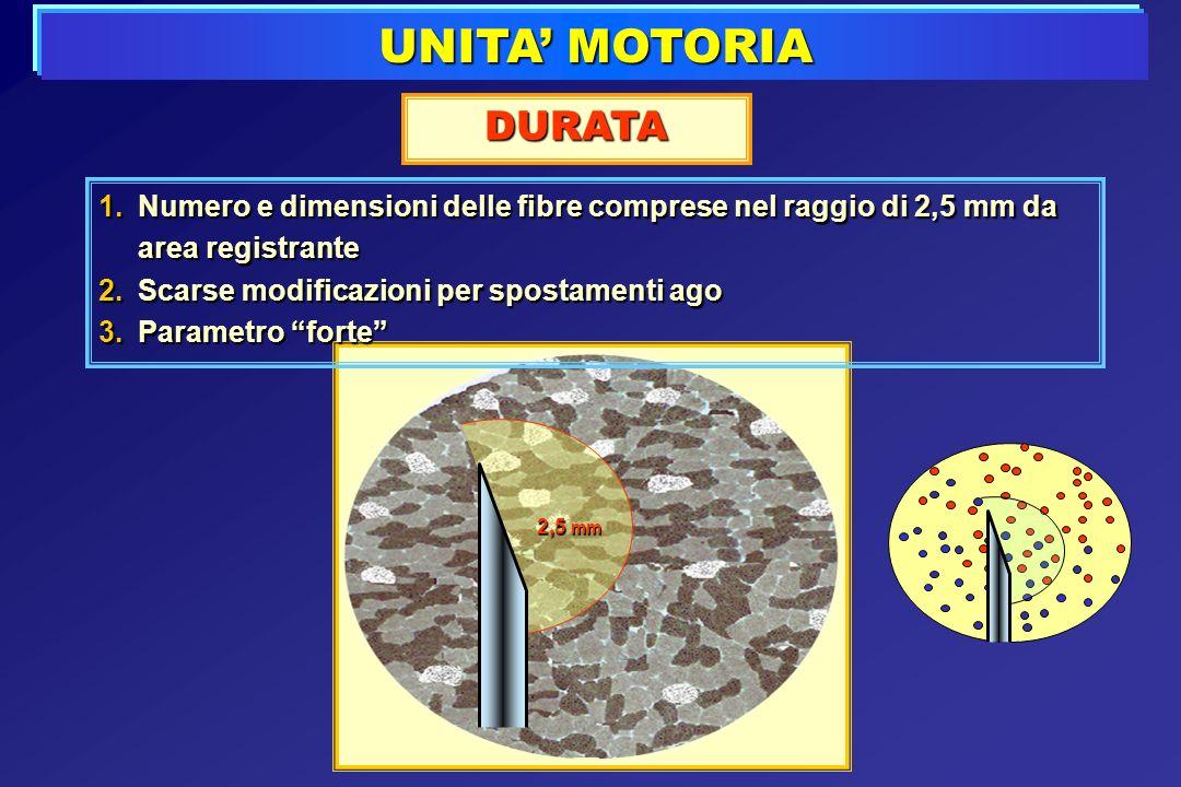 UNITA MOTORIA DURATA 1.Numero e dimensioni delle fibre comprese nel raggio di 2,5 mm da area registrante 2.Scarse modificazioni per spostamenti ago 3.