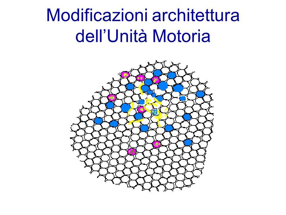 Modificazioni architettura dellUnità Motoria
