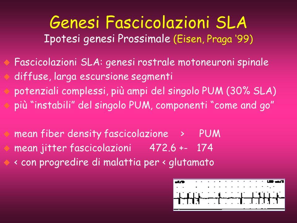 Genesi Fascicolazioni SLA Ipotesi genesi Prossimale (Eisen, Praga 99) u Fascicolazioni SLA: genesi rostrale motoneuroni spinale u diffuse, larga escur