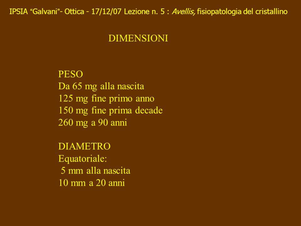 PESO Da 65 mg alla nascita 125 mg fine primo anno 150 mg fine prima decade 260 mg a 90 anni DIAMETRO Equatoriale: 5 mm alla nascita 10 mm a 20 anni DI