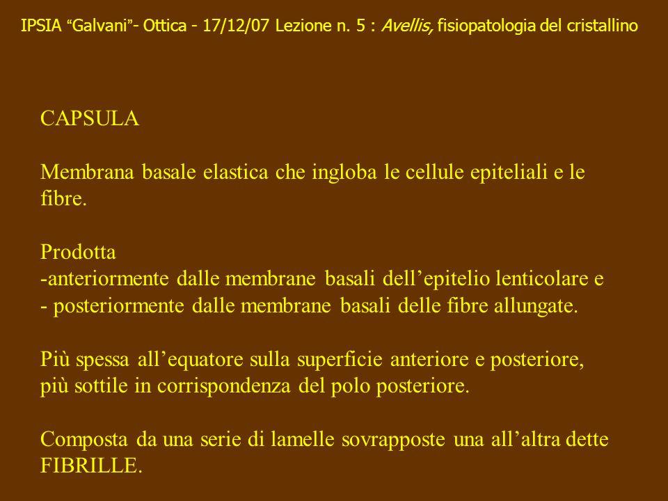 CAPSULA Membrana basale elastica che ingloba le cellule epiteliali e le fibre. Prodotta -anteriormente dalle membrane basali dellepitelio lenticolare