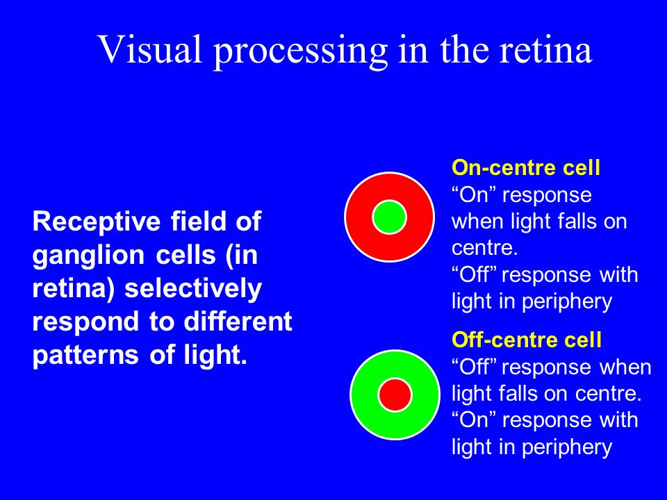 Visual processing in the retina Receptive field of ganglion cells (in retina) selectively respond to different patterns of light. On-centre cell On re