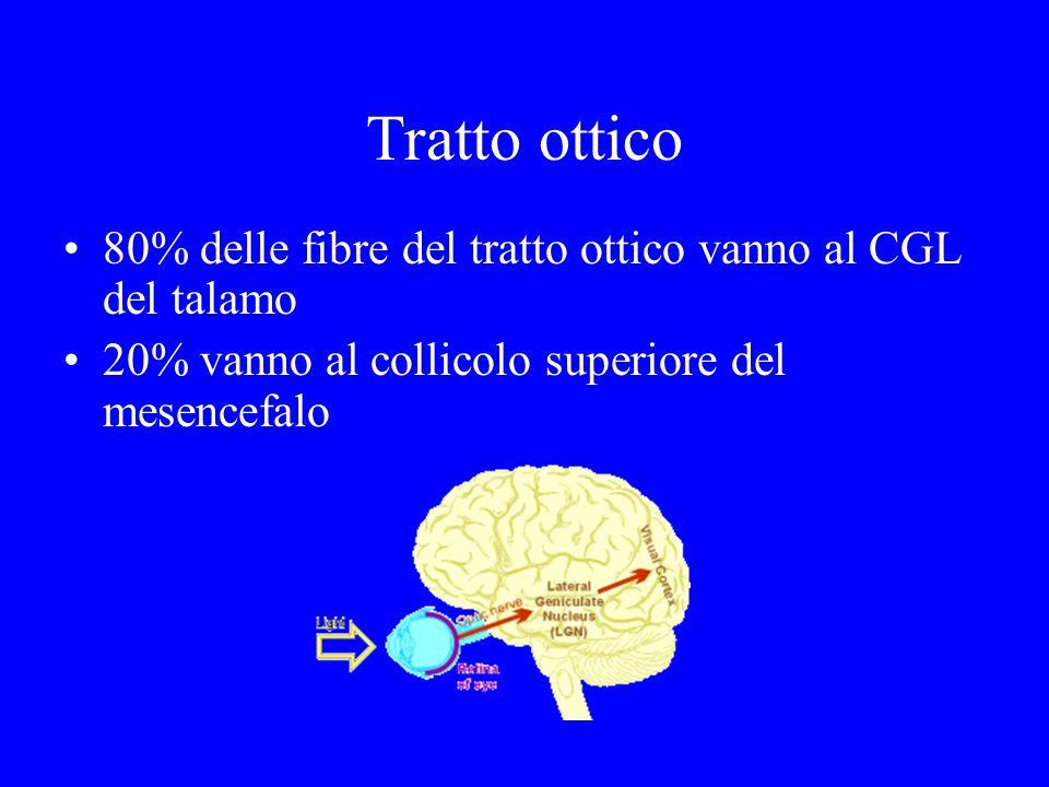 Tratto ottico 80% delle fibre del tratto ottico vanno al CGL del talamo 20% vanno al collicolo superiore del mesencefalo