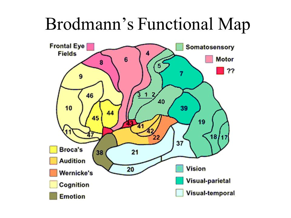 Brodmanns Functional Map