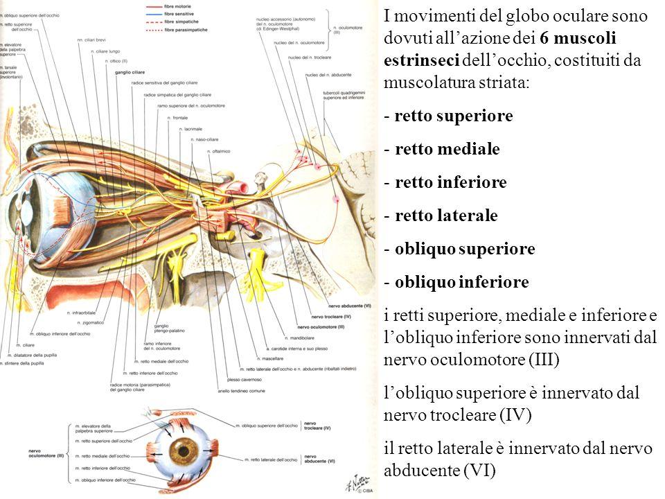 I movimenti del globo oculare sono dovuti allazione dei 6 muscoli estrinseci dellocchio, costituiti da muscolatura striata: - retto superiore - retto
