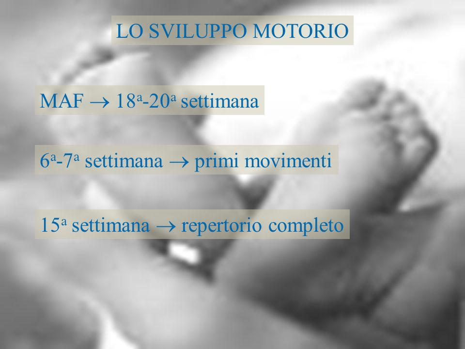 LO SVILUPPO MOTORIO MAF 18 a -20 a settimana 6 a -7 a settimana primi movimenti 15 a settimana repertorio completo