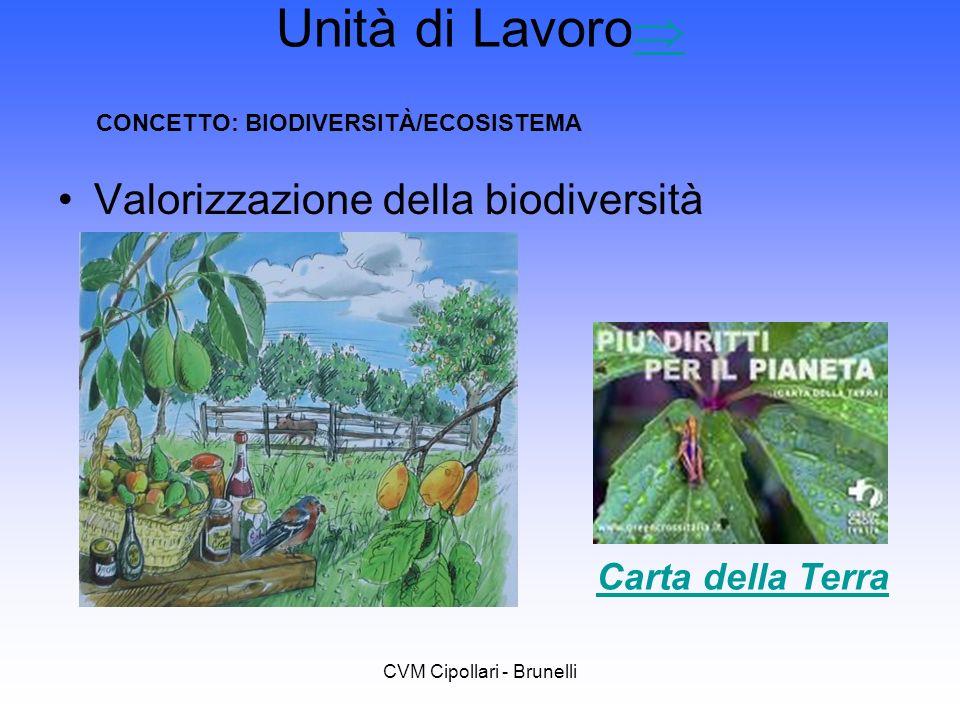 CVM Cipollari - Brunelli Unità di Lavoro Valorizzazione della biodiversità Carta della Terra CONCETTO: BIODIVERSITÀ/ECOSISTEMA