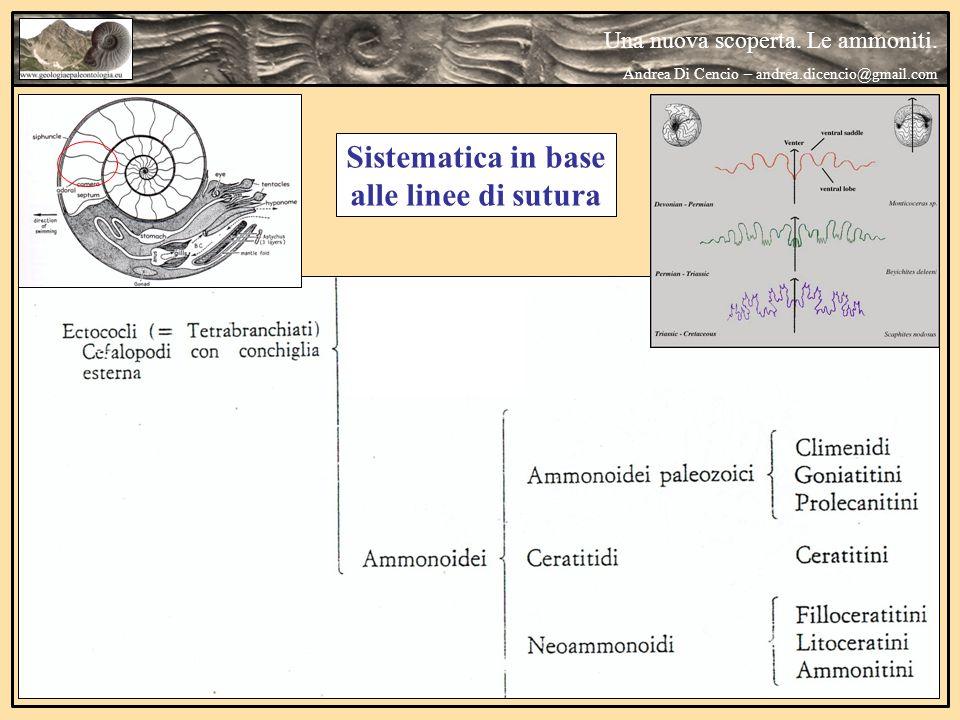 Distribuzione temporale della linea suturale Una nuova scoperta.