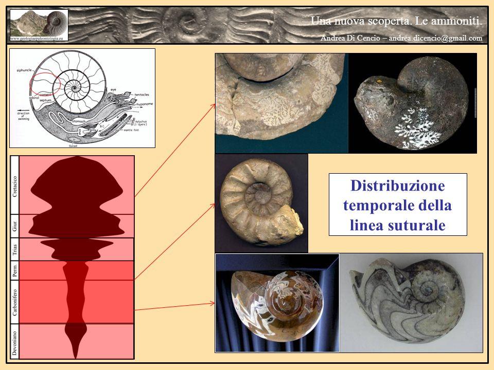 Una nuova scoperta. Le ammoniti. Andrea Di Cencio – andrea.dicencio@gmail.com Ambiente di vita