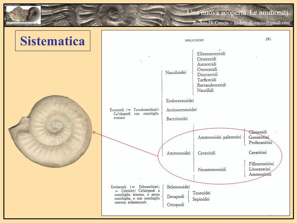 Sistematica Una nuova scoperta. Le ammoniti. Andrea Di Cencio – andrea.dicencio@gmail.com