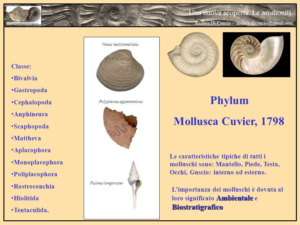 Phylum Mollusca Cuvier, 1798 Le caratteristiche tipiche di tutti i molluschi sono: Mantello, Piede, Testa, Occhi, Guscio: interno od esterno. Ambienta
