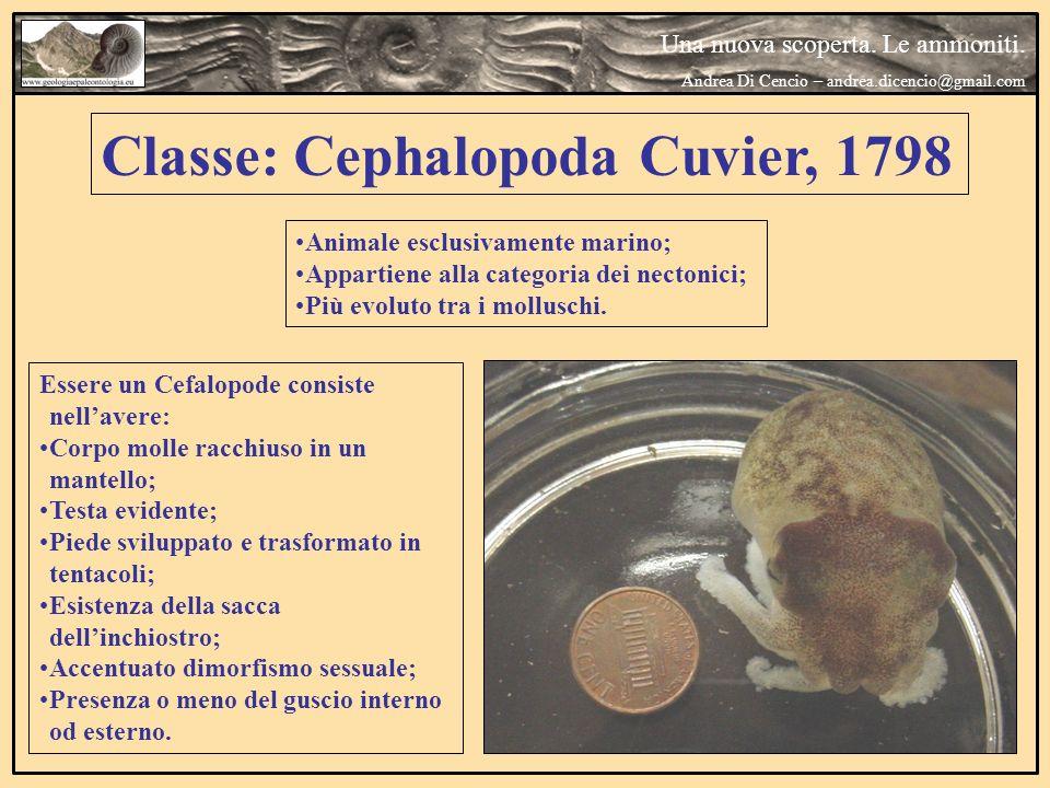 Classe: Cephalopoda Cuvier, 1798 Animale esclusivamente marino; Appartiene alla categoria dei nectonici; Più evoluto tra i molluschi. Essere un Cefalo