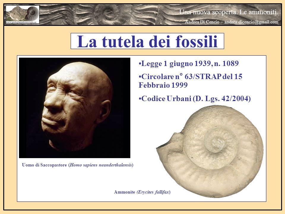 Una nuova scoperta. Le ammoniti. Andrea Di Cencio – andrea.dicencio@gmail.com La tutela dei fossili Uomo di Saccopastore (Homo sapiens neanderthalensi
