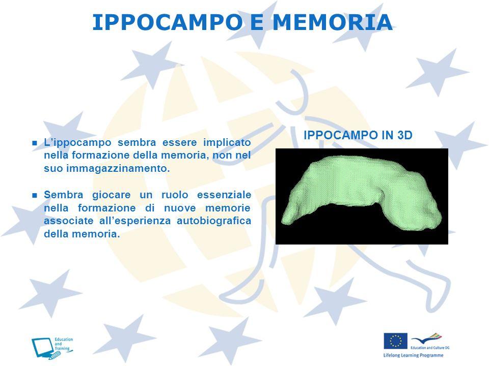 IPPOCAMPO E MEMORIA Lippocampo sembra essere implicato nella formazione della memoria, non nel suo immagazzinamento. Sembra giocare un ruolo essenzial
