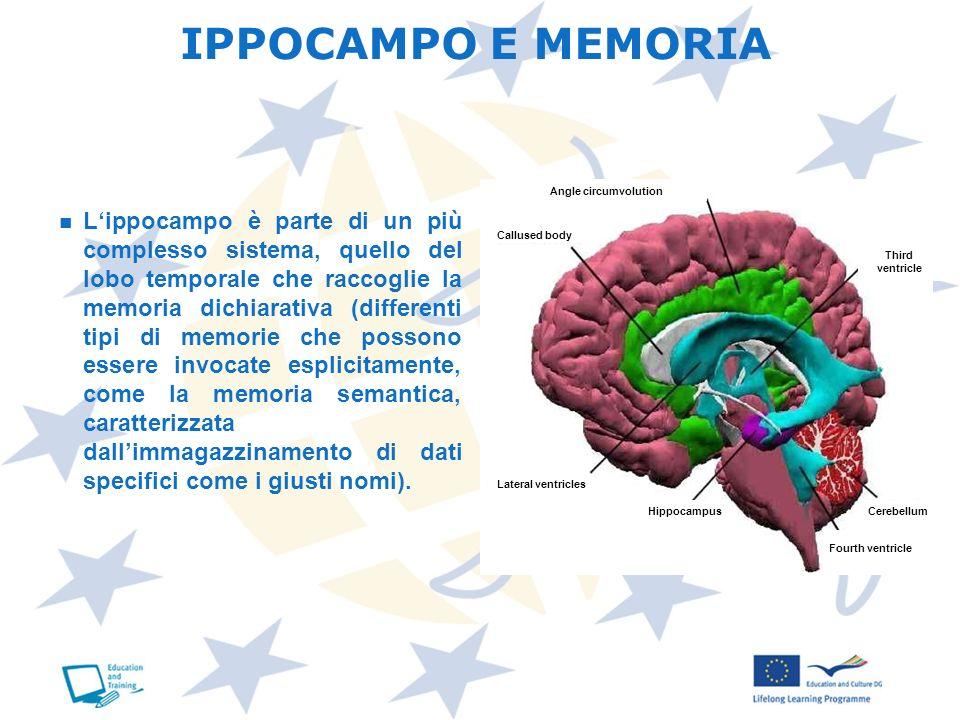 Lippocampo è parte di un più complesso sistema, quello del lobo temporale che raccoglie la memoria dichiarativa (differenti tipi di memorie che posson