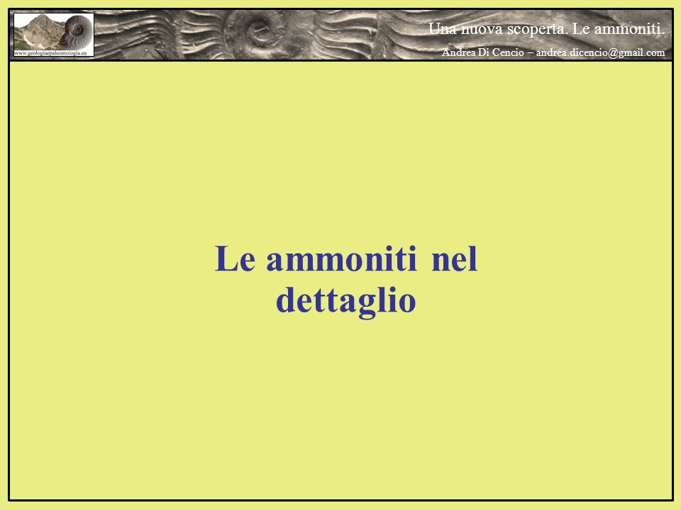 Le ammoniti nel dettaglio Una nuova scoperta. Le ammoniti. Andrea Di Cencio – andrea.dicencio@gmail.com