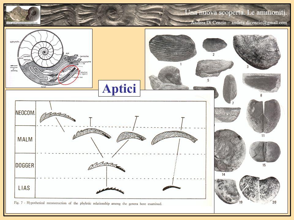 Una nuova scoperta. Le ammoniti. Andrea Di Cencio – andrea.dicencio@gmail.com Aptici
