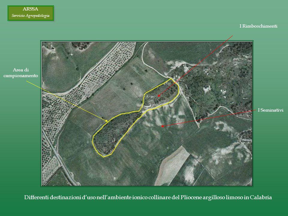 I Rimboschimenti I Seminativi Area di campionamento Differenti destinazioni duso nellambiente ionico collinare del Pliocene argilloso limoso in Calabria ARSSA Servizio Agropedologia ARSSA Servizio Agropedologia