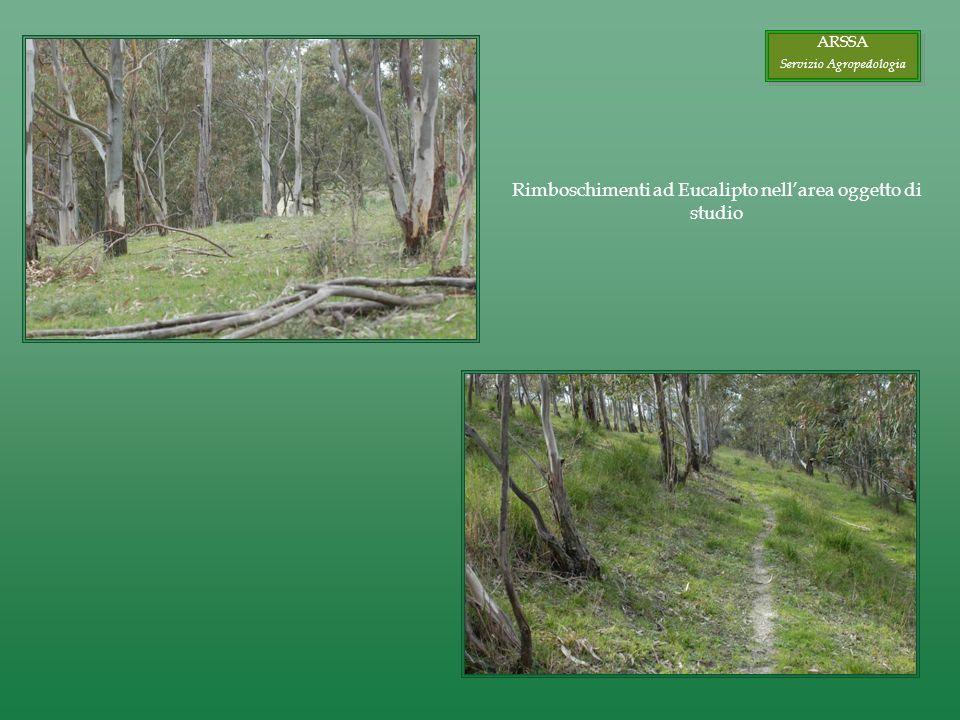 Rimboschimenti ad Eucalipto nellarea oggetto di studio ARSSA Servizio Agropedologia ARSSA Servizio Agropedologia