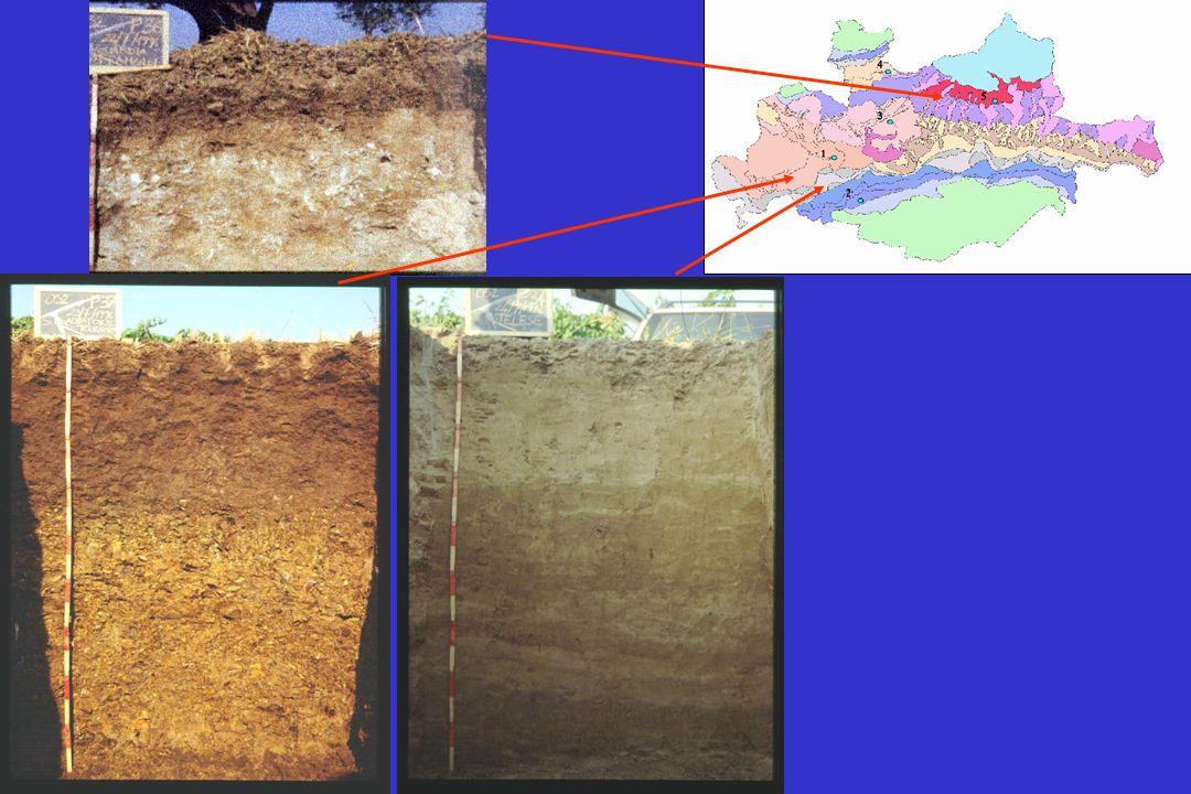 Area 1 traccia DGPS