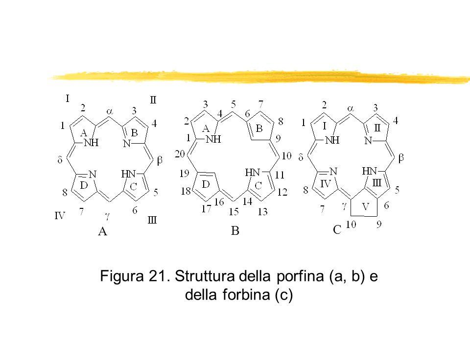 Figura 21. Struttura della porfina (a, b) e della forbina (c) A B C