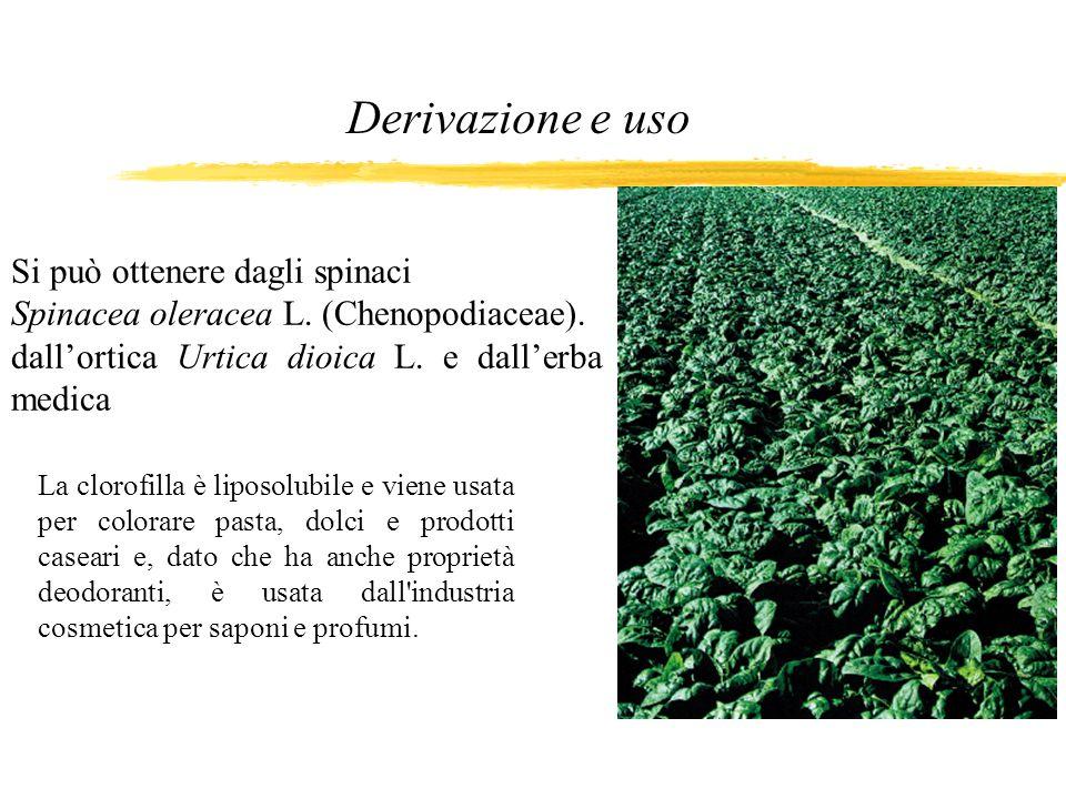 Si può ottenere dagli spinaci Spinacea oleracea L. (Chenopodiaceae). dallortica Urtica dioica L. e dallerba medica La clorofilla è liposolubile e vien