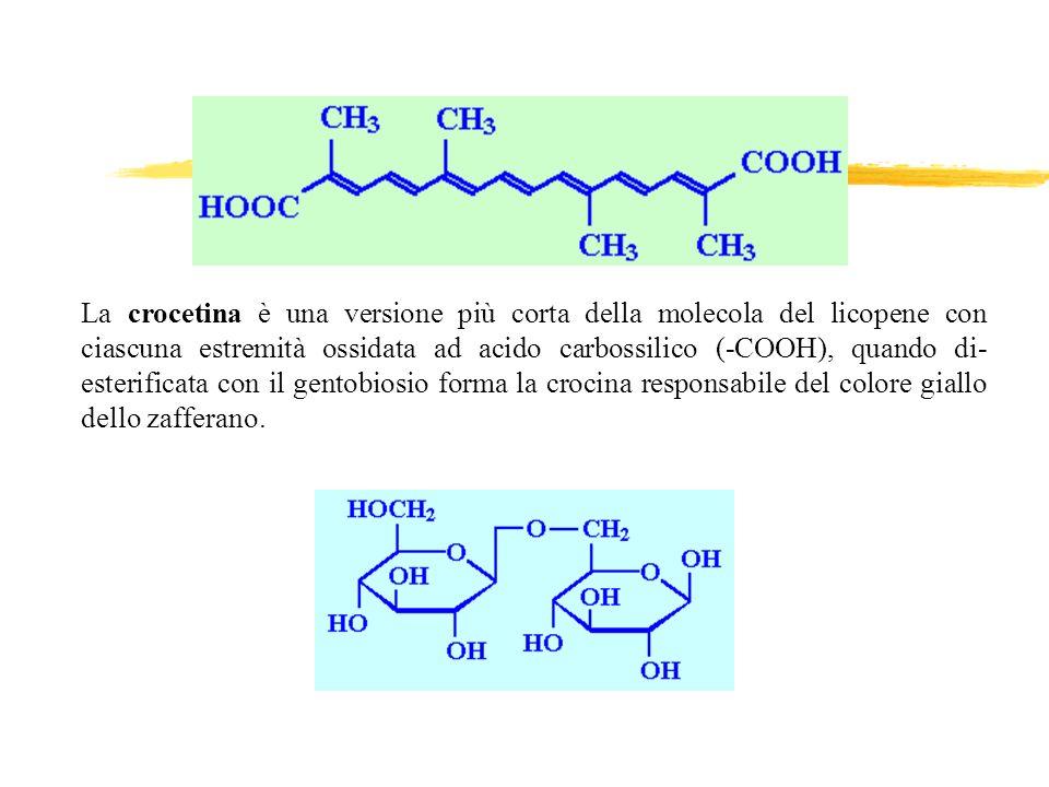 La crocetina è una versione più corta della molecola del licopene con ciascuna estremità ossidata ad acido carbossilico (-COOH), quando di- esterifica