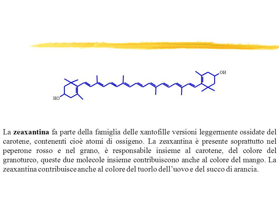 La zeaxantina fa parte della famiglia delle xantofille versioni leggermente ossidate del carotene, contenenti cioè atomi di ossigeno. La zeaxantina è