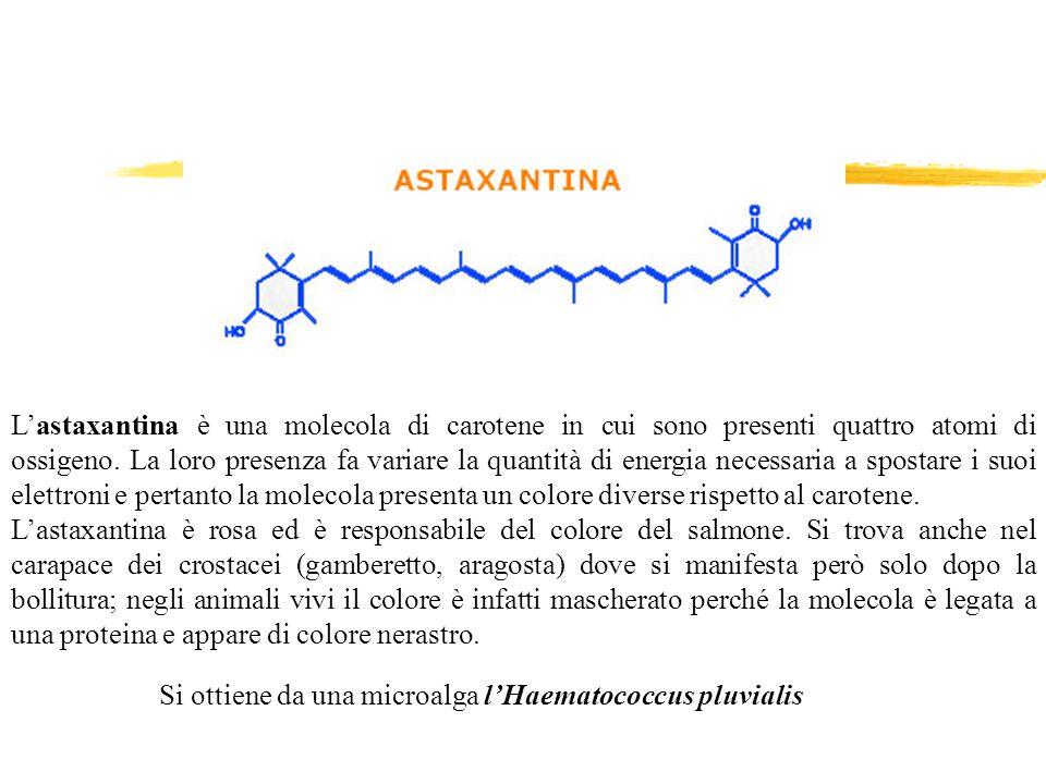 Lastaxantina è una molecola di carotene in cui sono presenti quattro atomi di ossigeno. La loro presenza fa variare la quantità di energia necessaria