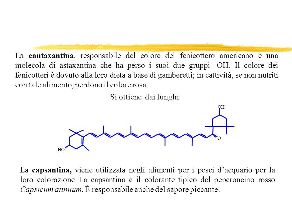 La cantaxantina, responsabile del colore del fenicottero americano è una molecola di astaxantina che ha perso i suoi due gruppi -OH. Il colore dei fen