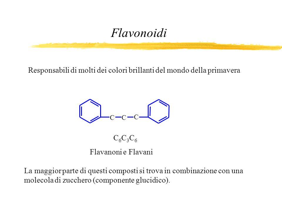 La maggior parte di questi composti si trova in combinazione con una molecola di zucchero (componente glucidico). Flavonoidi Responsabili di molti dei