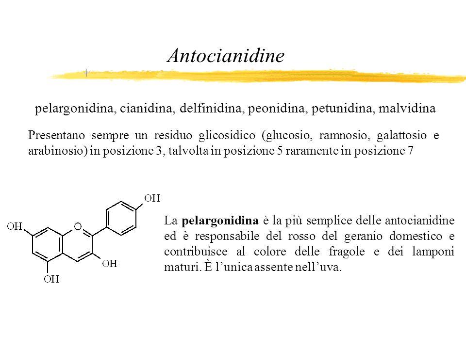 La pelargonidina è la più semplice delle antocianidine ed è responsabile del rosso del geranio domestico e contribuisce al colore delle fragole e dei