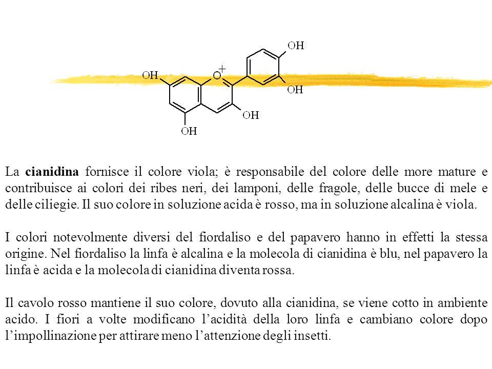 La cianidina fornisce il colore viola; è responsabile del colore delle more mature e contribuisce ai colori dei ribes neri, dei lamponi, delle fragole