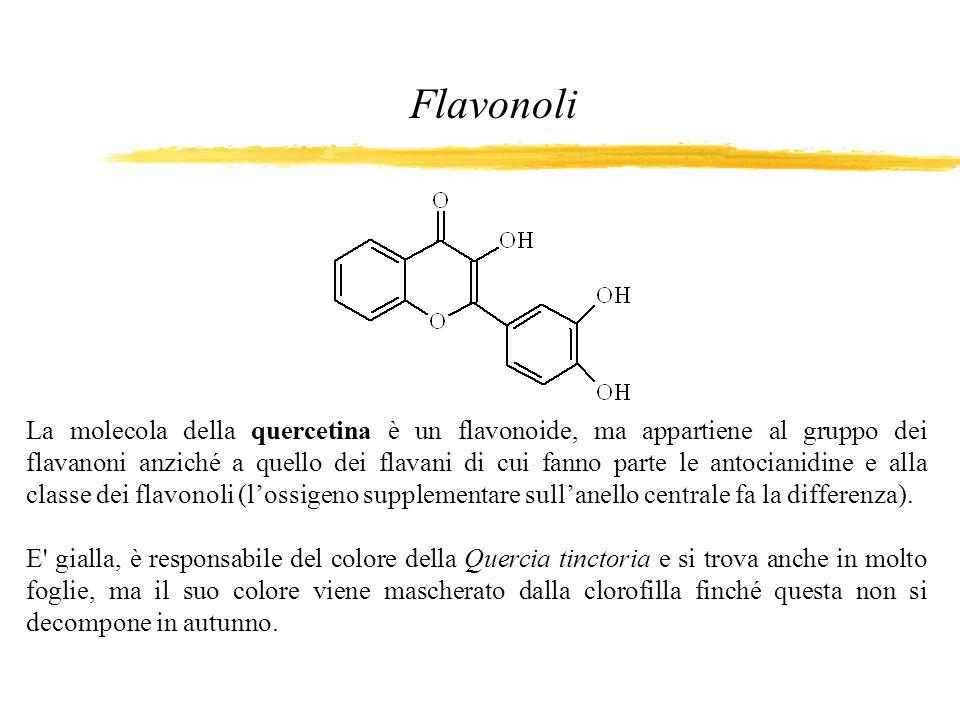 La molecola della quercetina è un flavonoide, ma appartiene al gruppo dei flavanoni anziché a quello dei flavani di cui fanno parte le antocianidine e